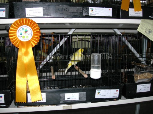 Equipa Frisado do Norte Amarelo - Campeão Nacional 2012