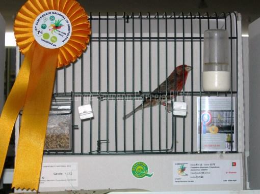 Carpodacus Mexicanus - Campeão Nacional 2012