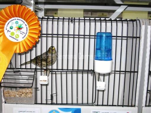 Lizard Prateado Calota Imperfeita - Campeão Nacional 2012