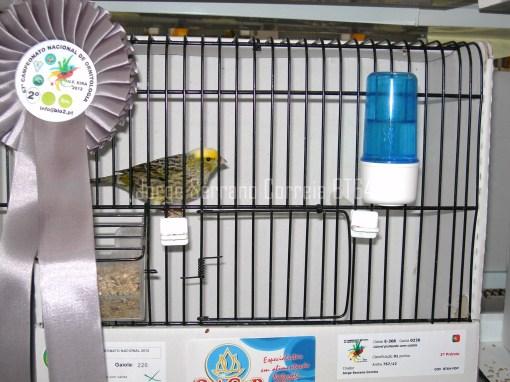 Lizard Prateado Calota Perfeita - 2ºClass CN2012