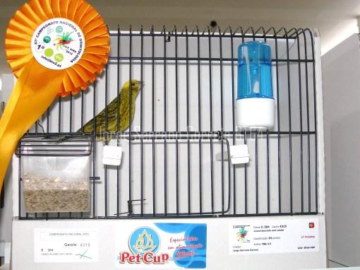 Lizard Dourado Calota Perfeita - Campeão Nacional 2012